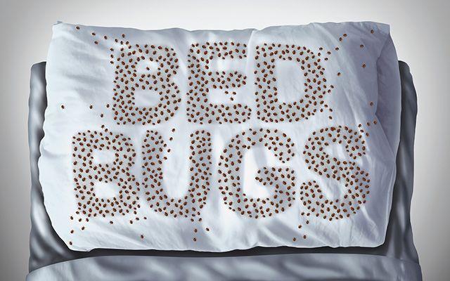 bed bug extermination | bed bug on pillow | bed bug infestation | pest detective