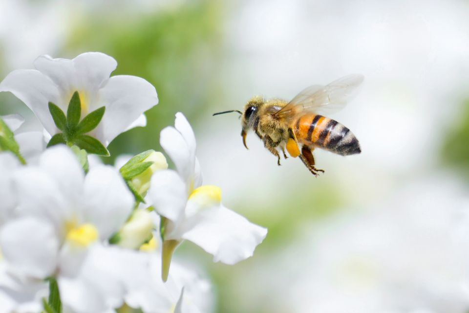 summer insects away | bee near flower | insect control insect extermination | pest detective