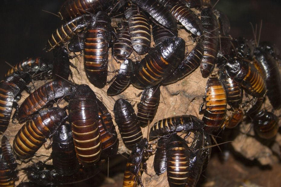 winter pest infestation | bug insect infestation | insect exterminator | pest detective