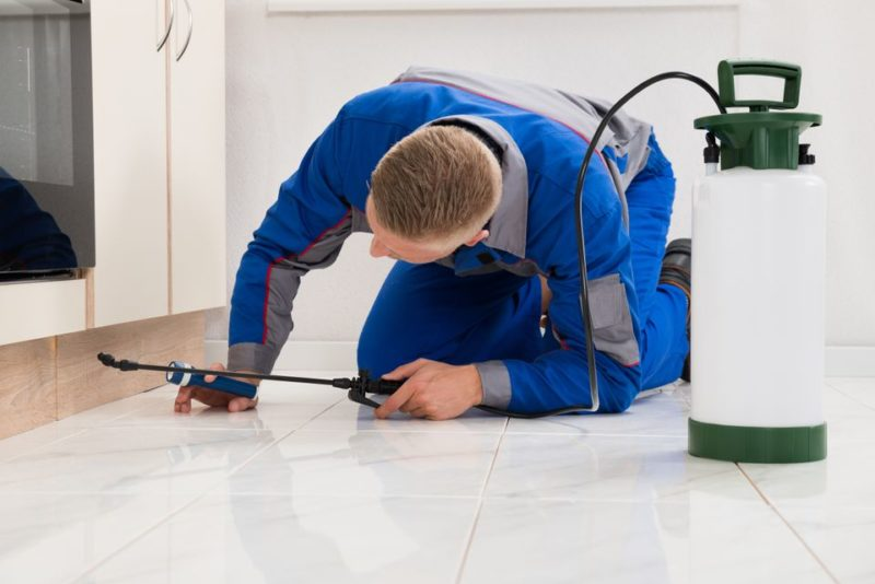 pest control methods | exterminator with chemical spray | pest detective pest control