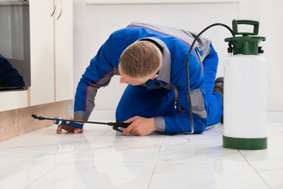 Spring Pest Control Methods | exterminator with chemical spray | pest detective pest control