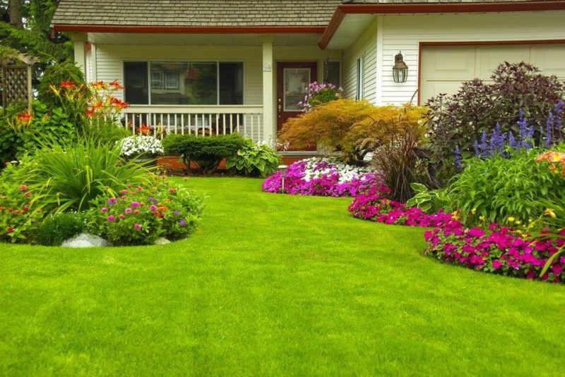 garden pest control | garden | insect control and extermination | pest detective