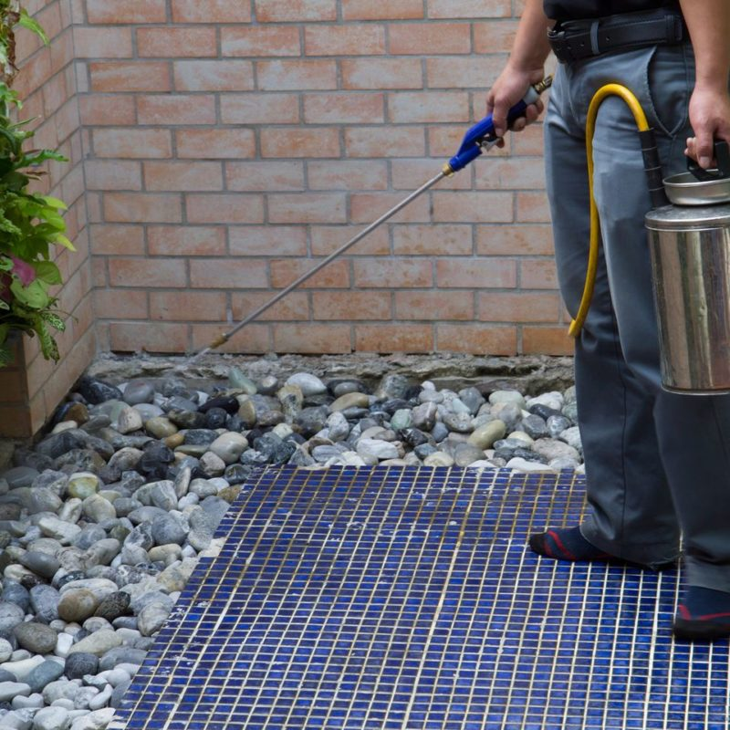 spring pest protection | chemical spray outdoor | pest detective pest control