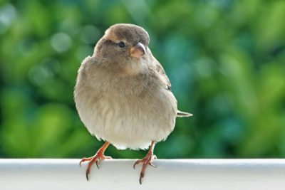 Bird Proof Services Vancouver | Pest Detective