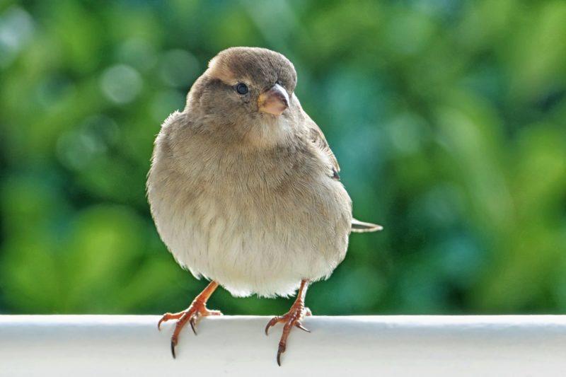 Bird Proof Services Vancouver | Pest Detective