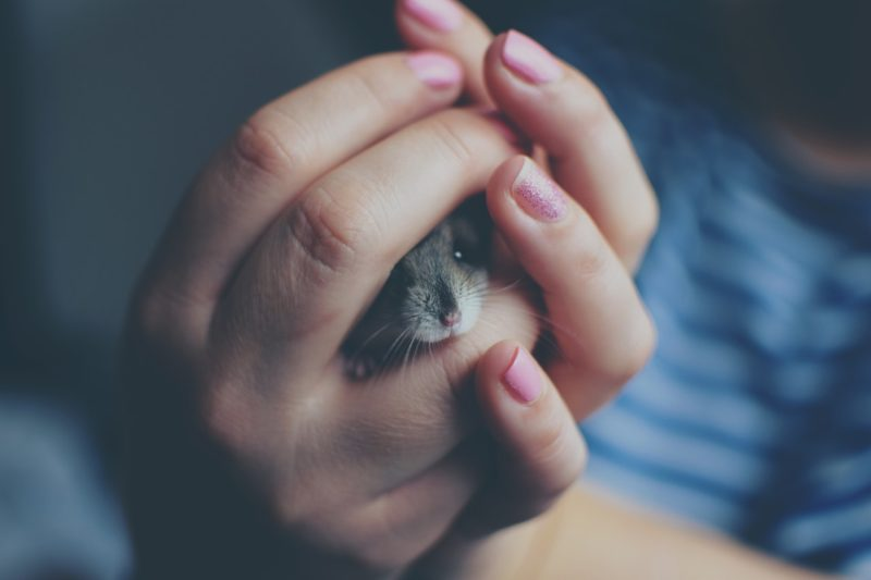 rodent control experts Vancouver | mice trapped in hands | Pest Detective